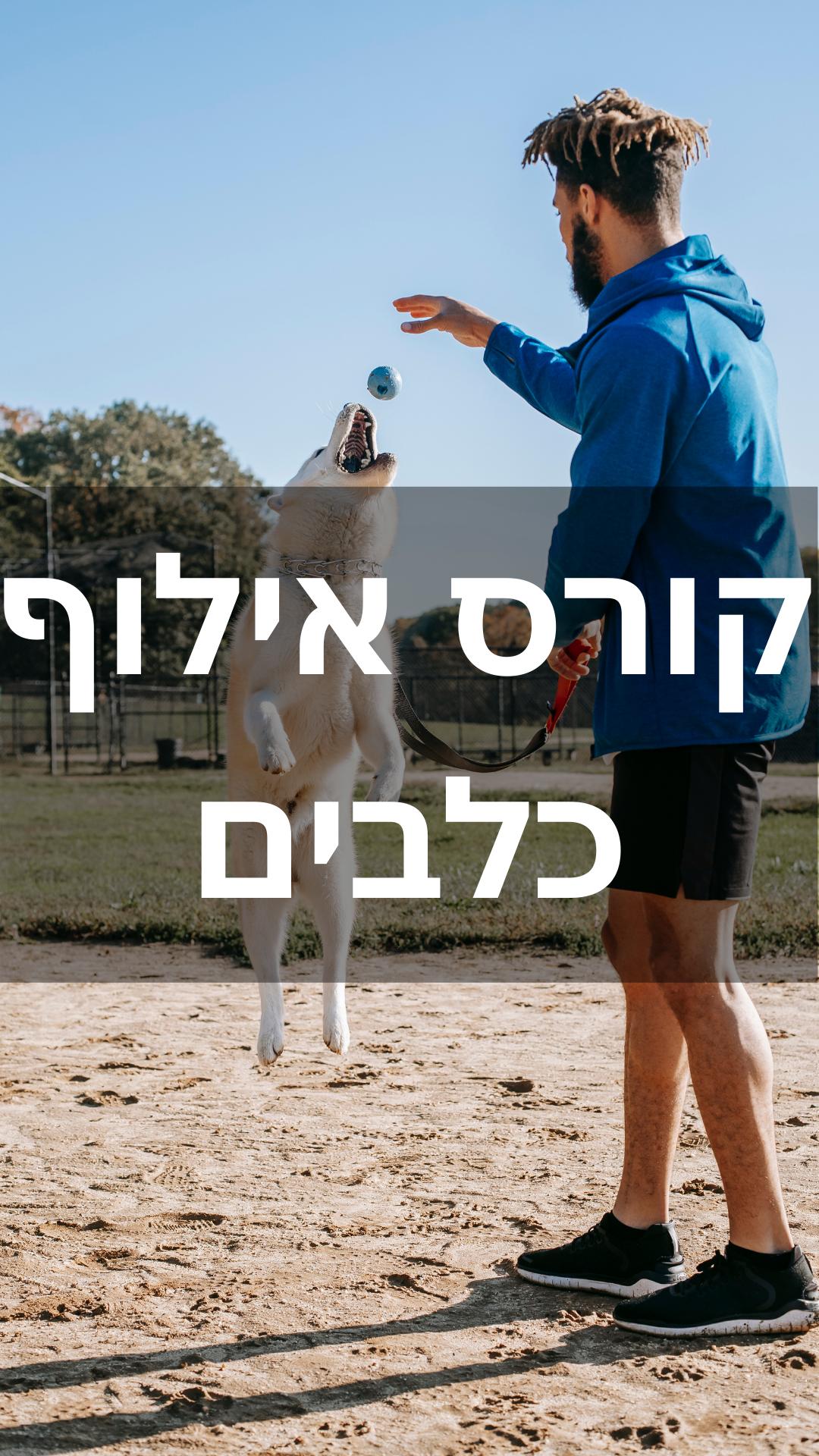 dog training digital course dogfitshape