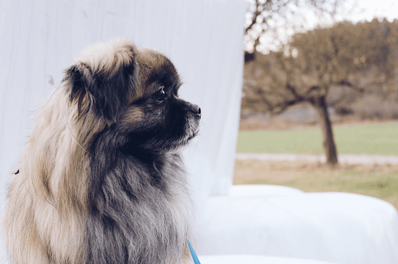 הכלב הכי טיפש - 10 הכלבים הטיפשים ביותר DOGFIT SHAPE
