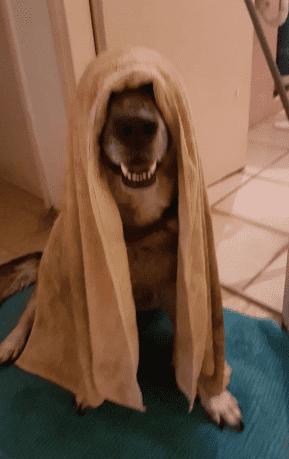 מקלחת לכלב - דוגפיט