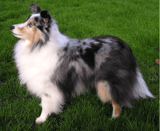 שלטי הכלב השישי הכי חכם